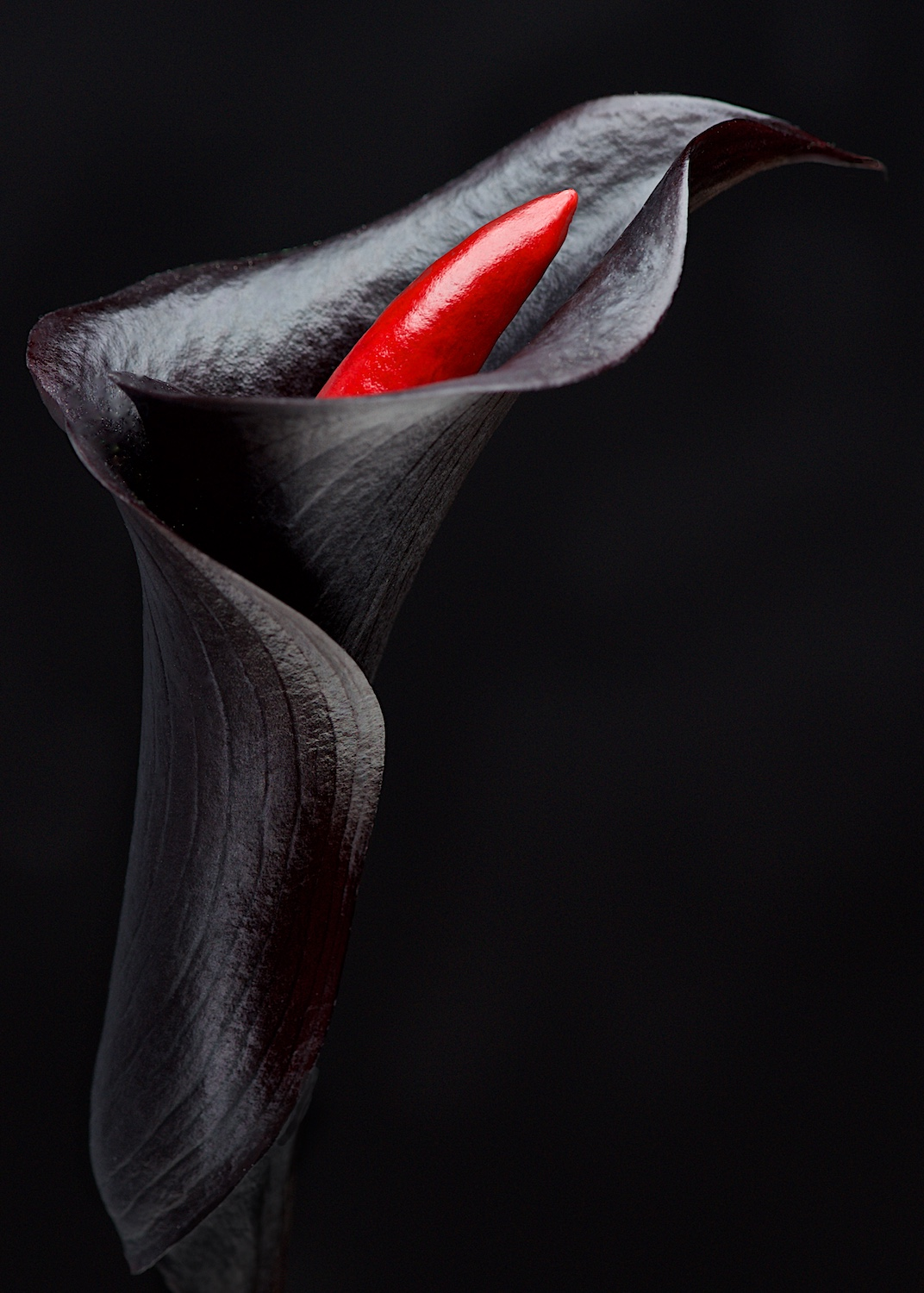 Black Calla Lily with red chili pepper concept on dark background by Bret Doss Commercial Food & Product Photography  Seattle